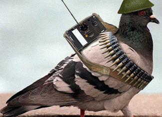 Tryb Gołąb w battlefield 1